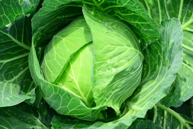 パルシステム 野菜