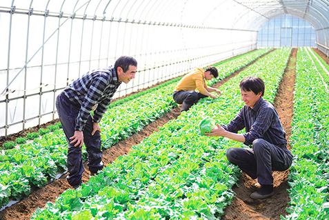大地を守る会の野菜の生産者